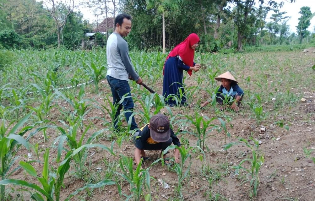 SD Muwri (Muhammadiyah Wringinanom) Gresik menggelar lomba foto keluarga bertema Hijauhkan Bumi. Pemenangnya sudah diumumkan Jumat (10/1/20).