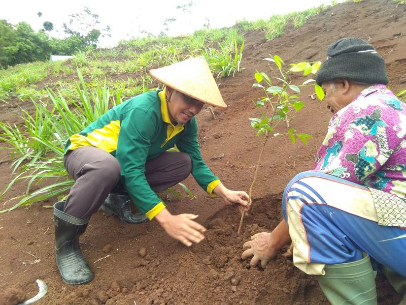 Kepala SMAN Nawangan Agus Zamroni MPd, kiri, menanam pohon mahoni bersama Kepala Dusun Banaran Yahman dalam reboisasi tanah bencana. (Isa Anshori/PWMU.CO)