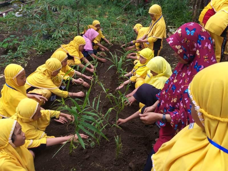 Siswa SD Muhammadiyah 12 belajar bercocok tanam jahe di acara outbound. (Dzanun/PWMU.CO)