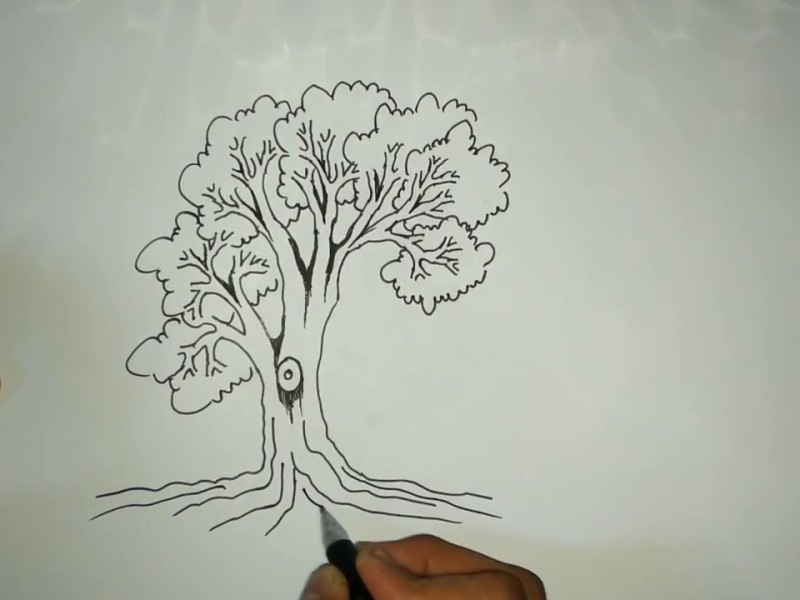 Pemuda Muhammadiyah wujudkan seperti pohon yang baik.