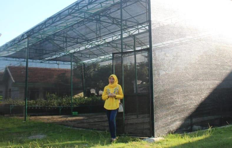 Omset jutaan dari anggrek Dendrobium dihasilkan alumnus Jurusan Biologi Universitas Muhammadiyah Malang (UMM) asal Tulungagung.