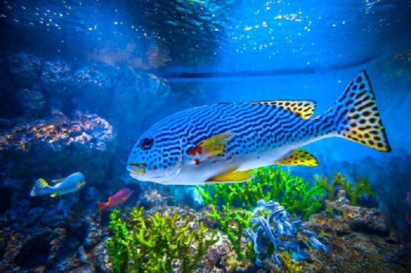 Sob! Ayo Bergerak Seperti Ikan di Laut, kolom ditulis oleh Ichwan Arif guru SMP Muhammadiyah 12 (Spemdalas) GKB Gresik.