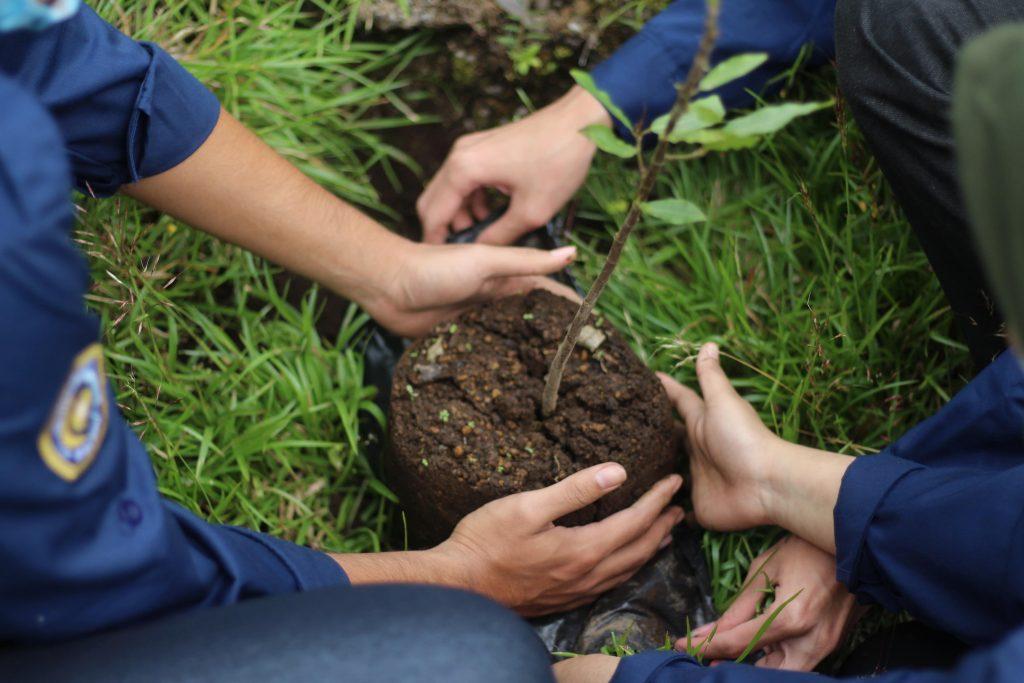 Bibit Pohon Ara yang ditanam Mahasiswa UMM untuk menjaga konservasi alam (Jafar Shodiq/PWMU.CO)