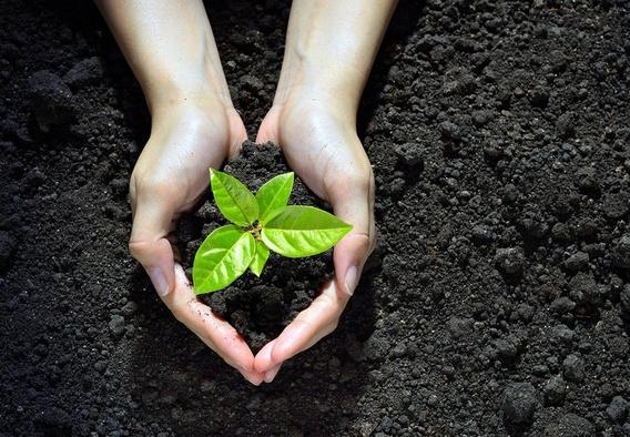 Kebangkitan Gerakan Ekologi